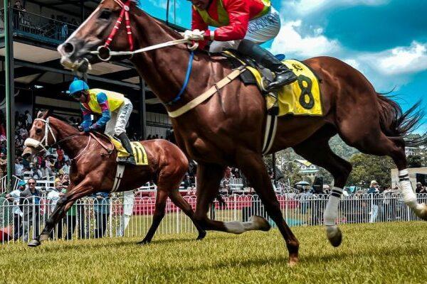 Horse Racing Betting